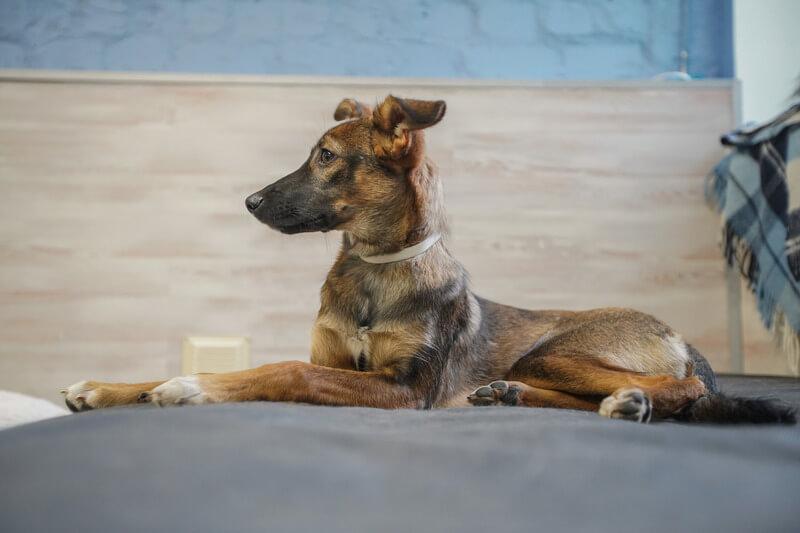собака ведет себя спокойно