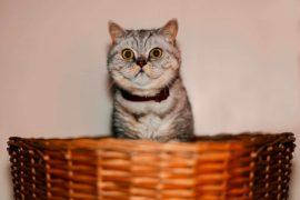 Как подготовить кота к гостинице