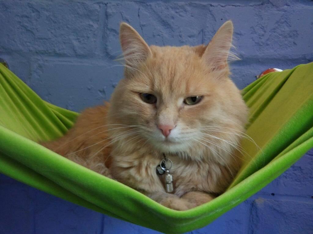 кот боится оставаться в отеле для животных