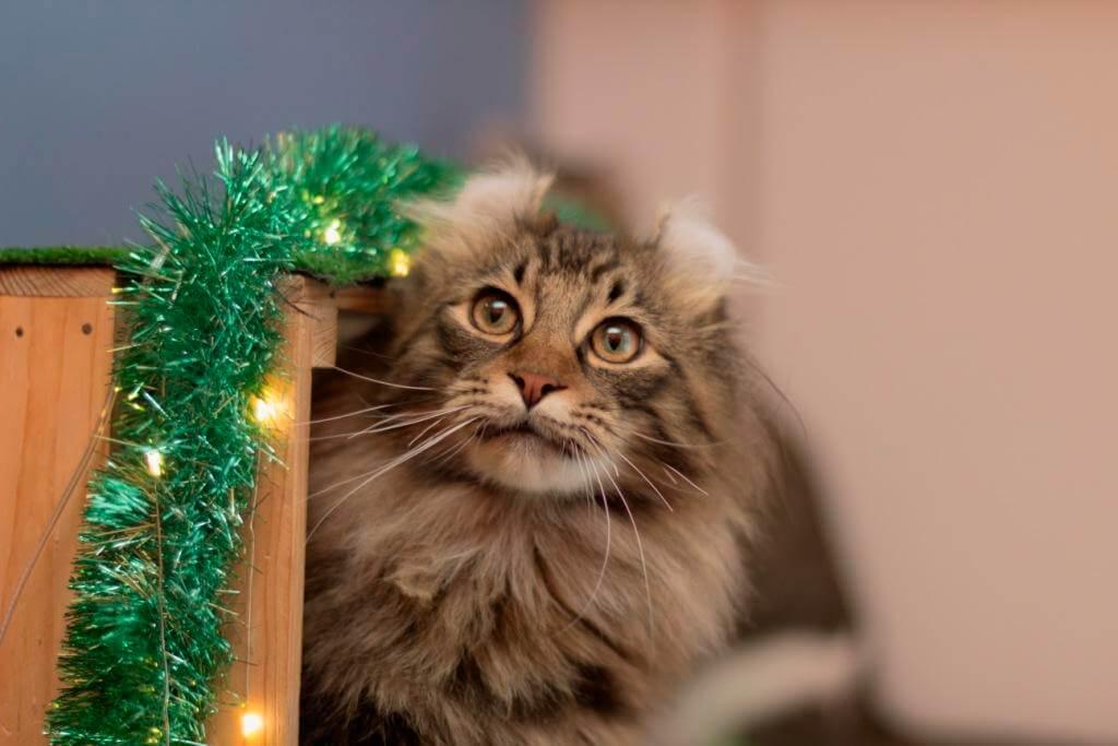 как приучить кота оставаться в гостинице для животных