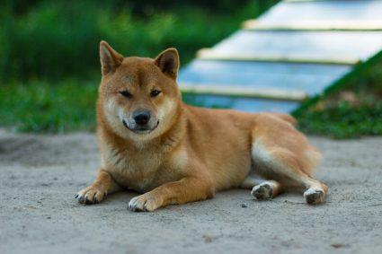 Тренируйте спокойствие вашей собаки