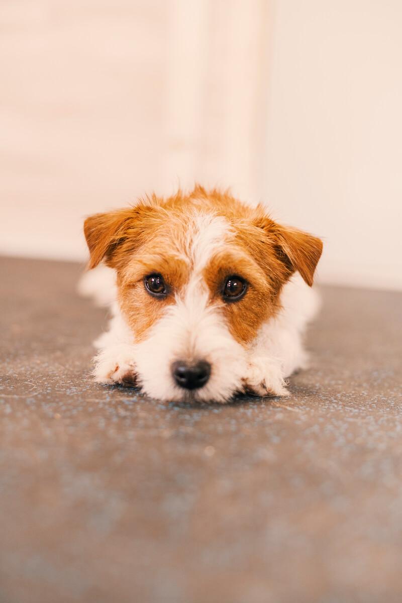 как воспитать в собаке выдержку и спокойствие