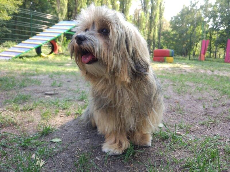 как правильно ухаживать за ртом собаки