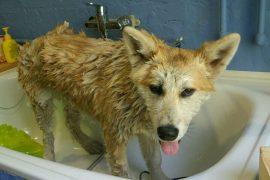 Как часто надо мыть собаку