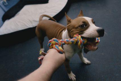 Как ухаживать за ротовой полостью собаки