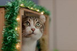 Почему Кот ходит в туалет рядом с лотком