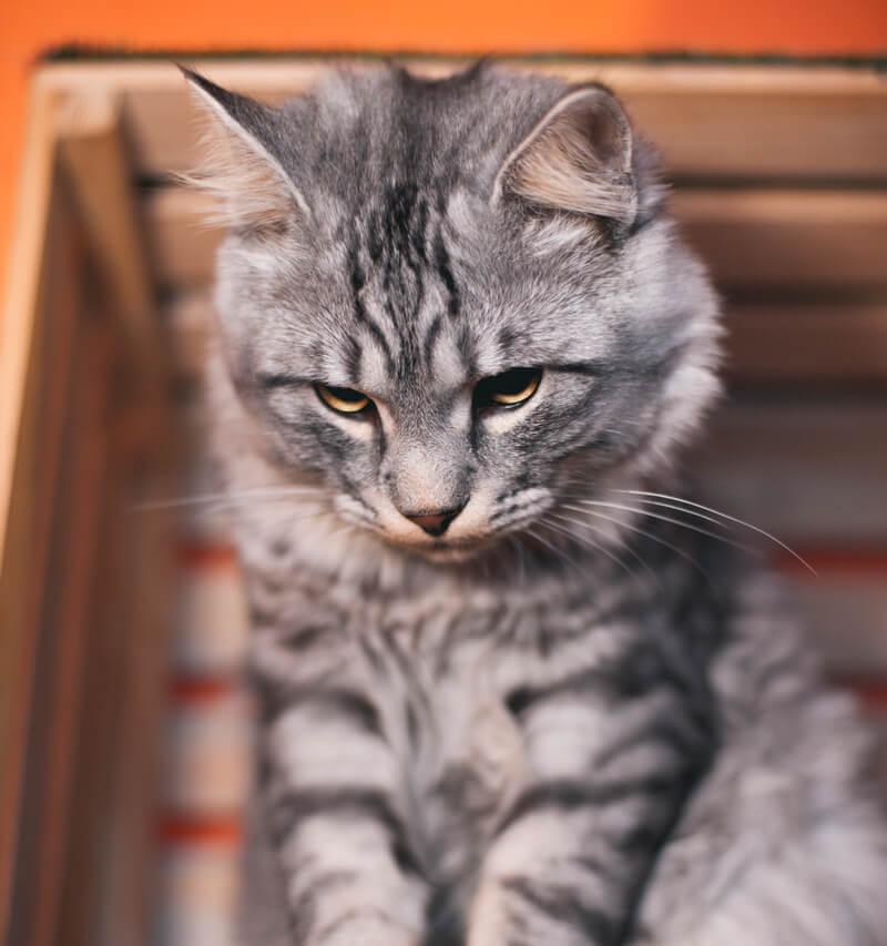 выбираем лоток для кошки правильно - инструкция