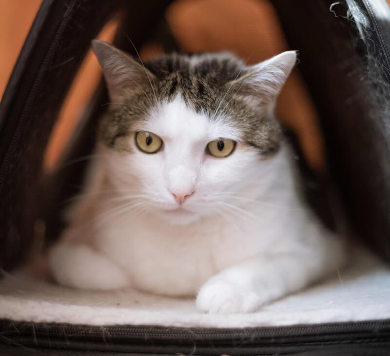 лоток для кота - как правильно выбрать