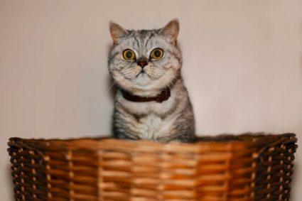 Как выбрать подходящий лоток для своей кошки
