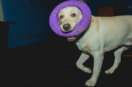 Собака ест экскременты. Что делать?