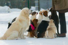 Методы дрессировки собак влияют на привязанность к хозяину