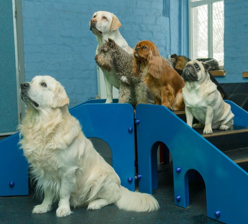 как дрессировать собаку чтобы не навредить