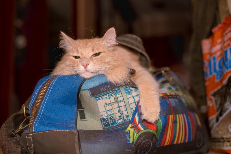 кошка приносит мертвых мышей почему