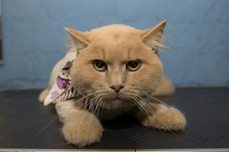 зачем кошка приносит мертвую добычу
