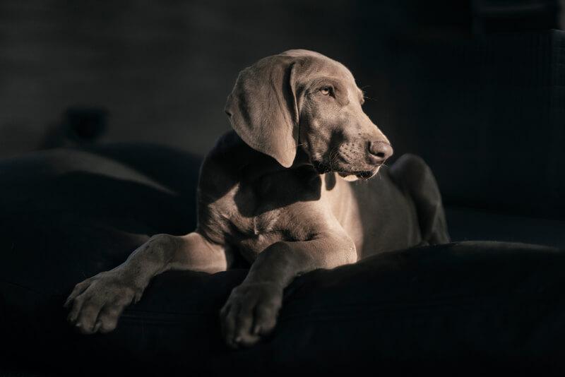 как понять что у собаки стресс