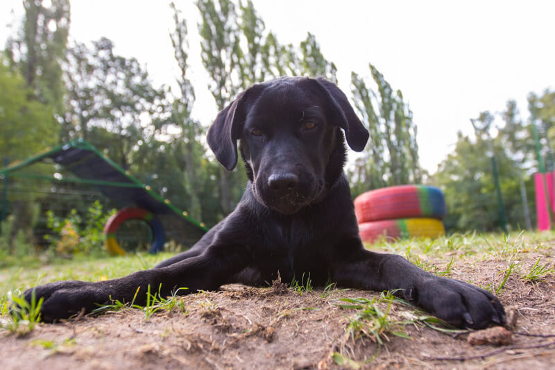 причины стрессовых состояний у собак