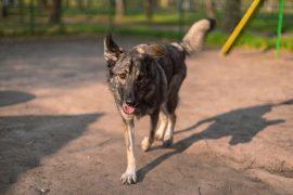 Почему собаки загребает какашки – это странно… Или нет?
