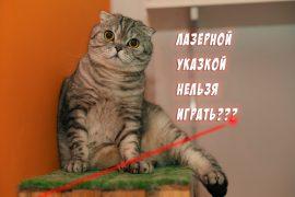 Почему нельзя играть с кошкой лазерной указкой?