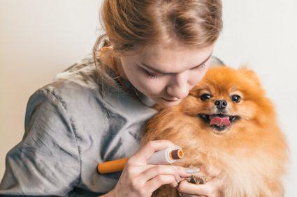 Зачем собакам стричь когти?