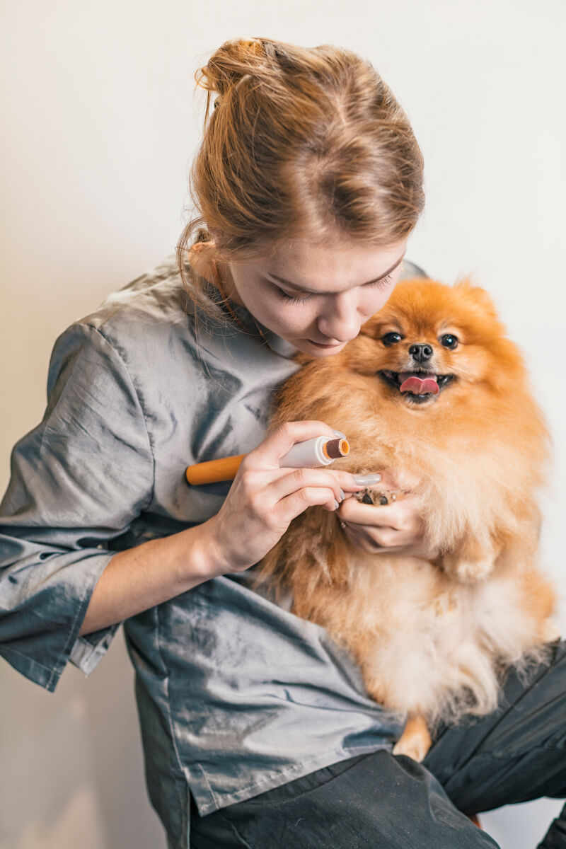нужно ли собакам стричь когти
