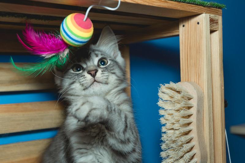 почему лазерная указка для кота это плохо