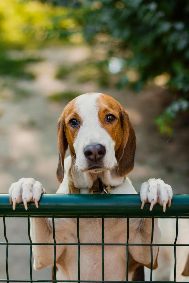 зачем собакам подрезают когти
