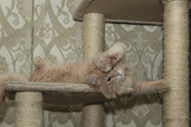 how to train a cat to a scratching post