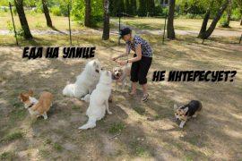 Почему отвлечение собаки лакомствами не работает?