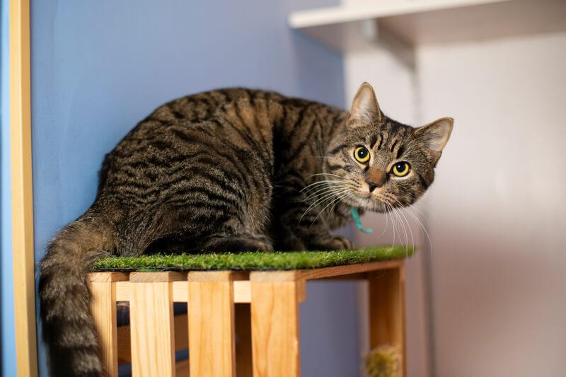 почему коты и кошки мяукают