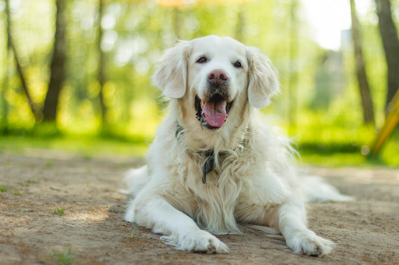как обучить собаку чистить зубы