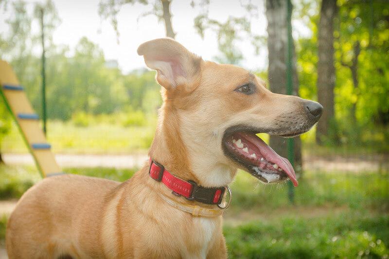 как научить собаку чистить зубы