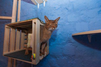 Как понять что кота нужно нести к ветеринару: маркеры повадок и поведения