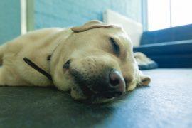 Как помочь собаке при атопическом дерматите?