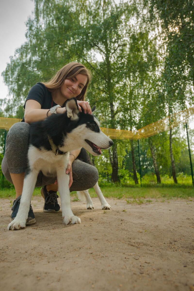 помощь собаке с атопическим дерматитом