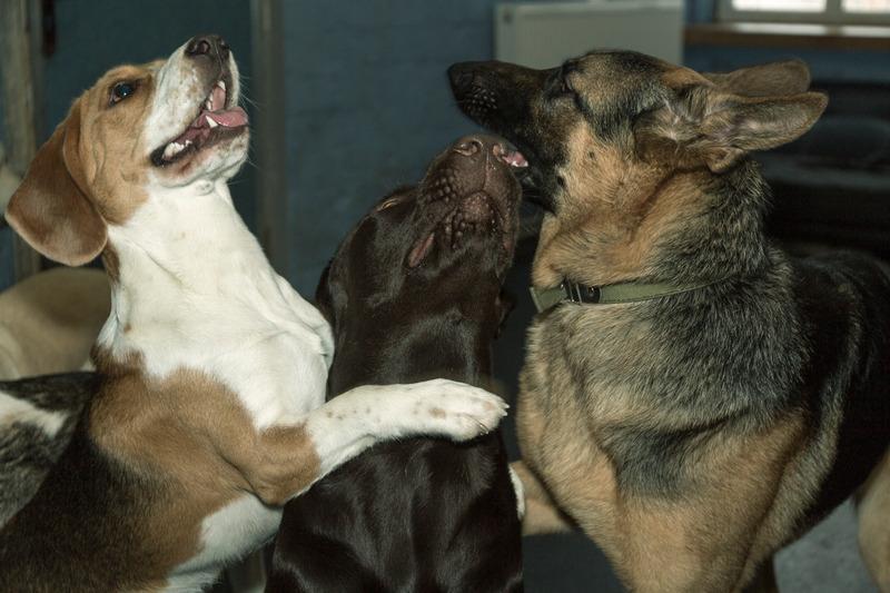 симптомы атопического дерматита у собак