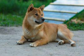 Одомашнивание собак: краткая экскурсия в историю