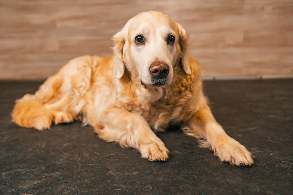 собака справляет нужду в доме как отучить