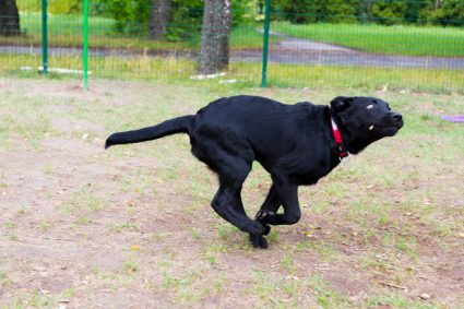 Собака лает и прыгает на гостей. Что делать?