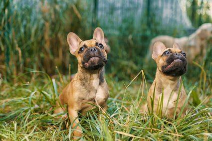 """Как научить собаку молчать по команде """"тихо""""?"""