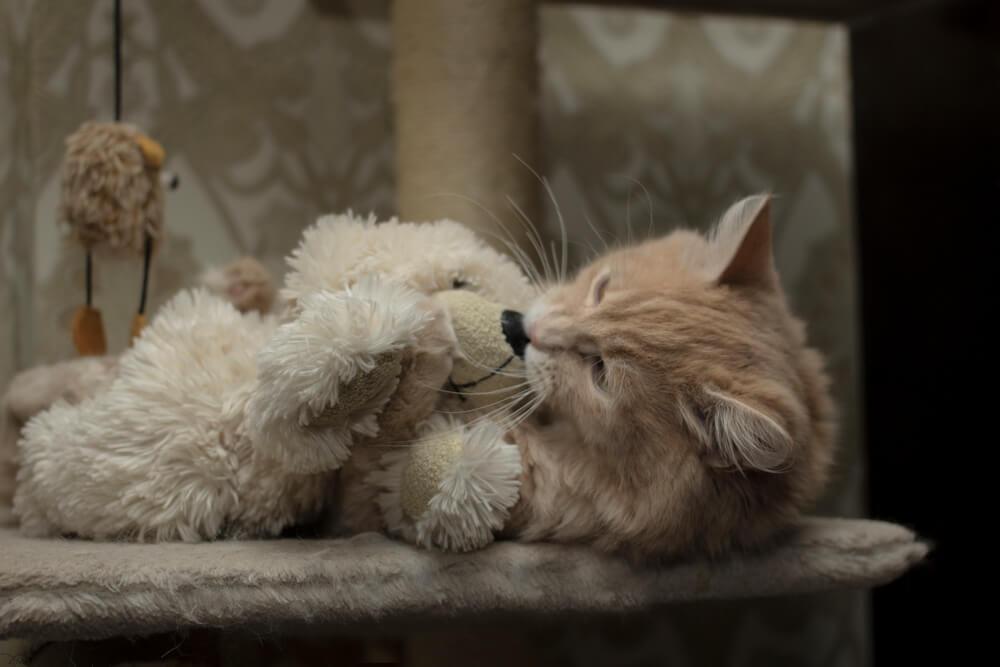 почему коты не любят мыться