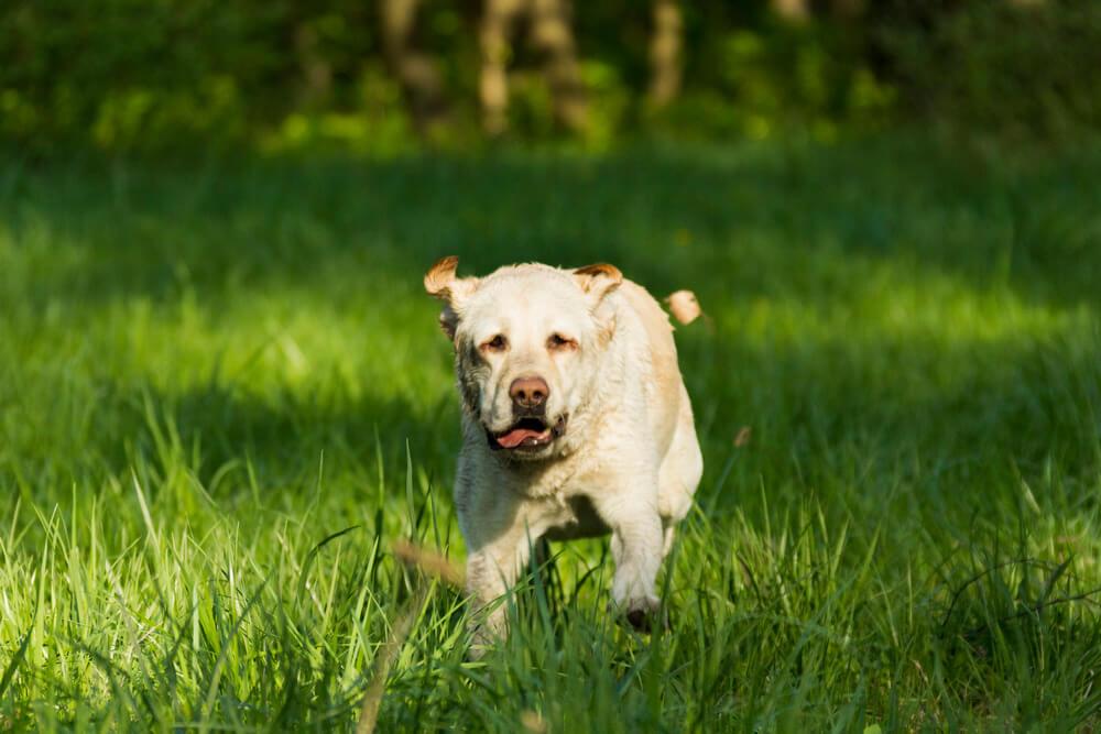 собака боится стричь когти
