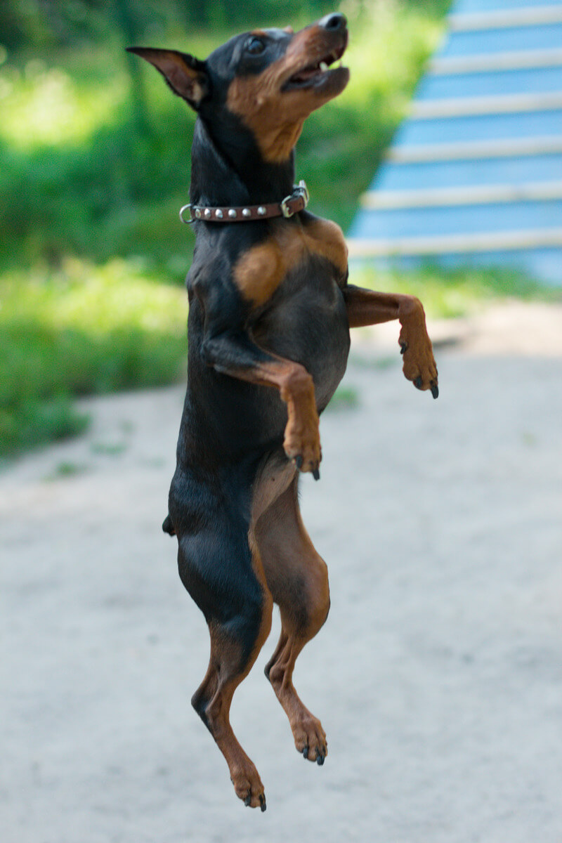 какого запаха боятся собаки