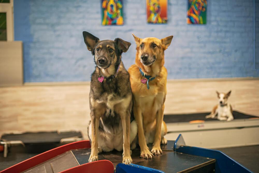 собаки из приютов
