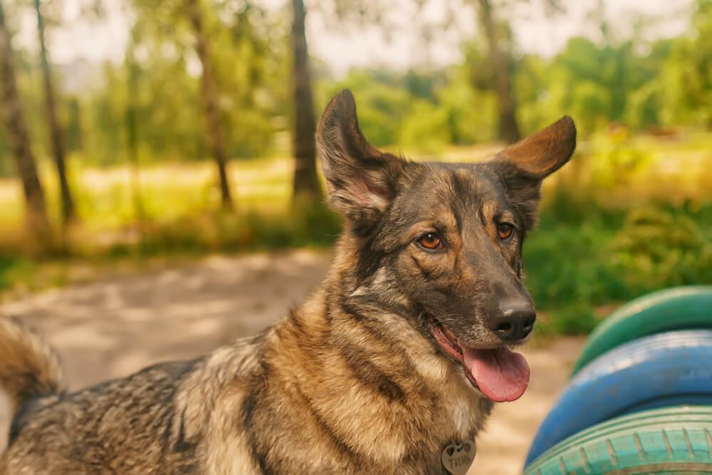 забрать собаку из приюта