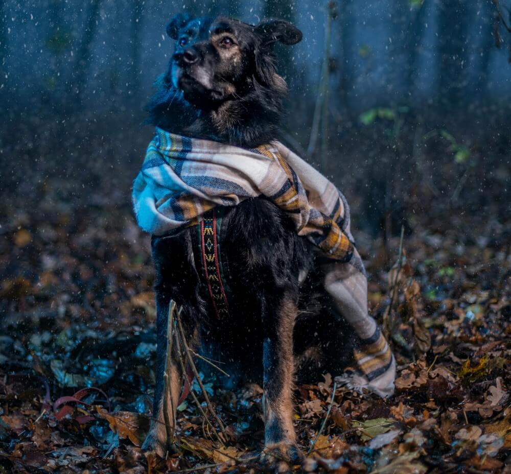 простуда у собаки