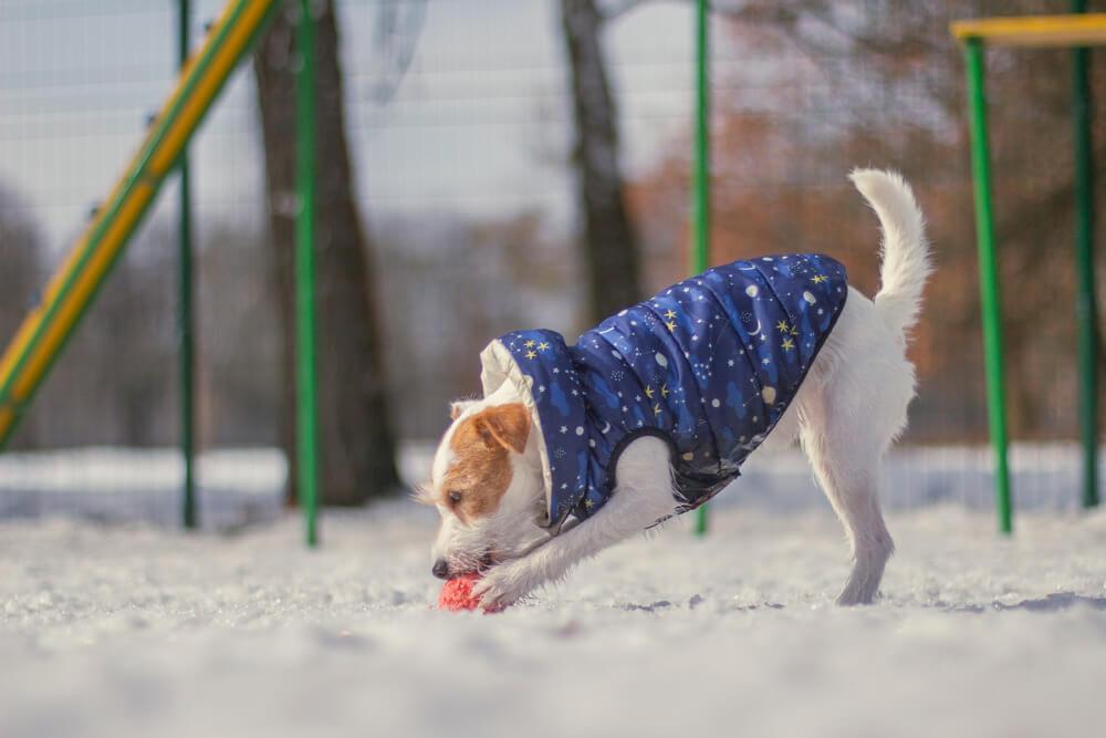 антибиотики для собак при простуде