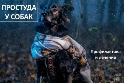 Простуда у собак. Профилактика и лечение