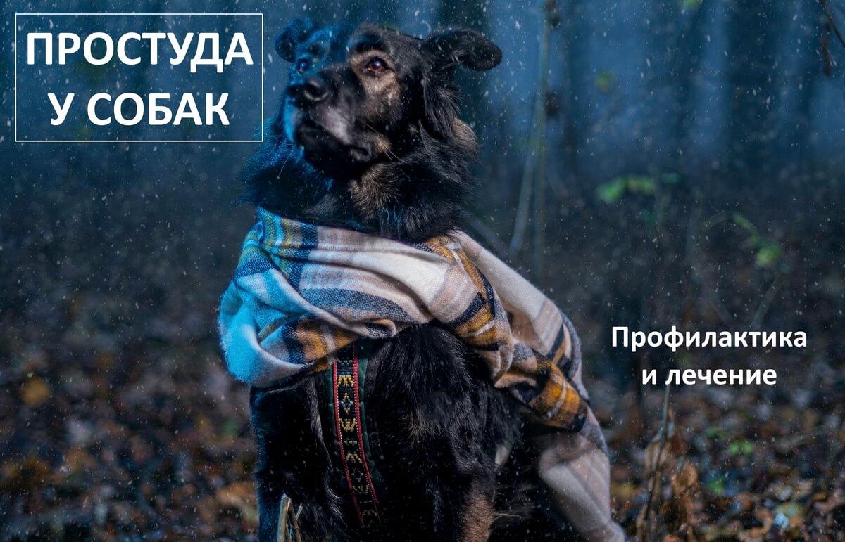 обложка простуда у собак