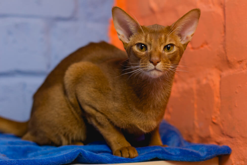 какие прививки делают домашним котам и кошкам