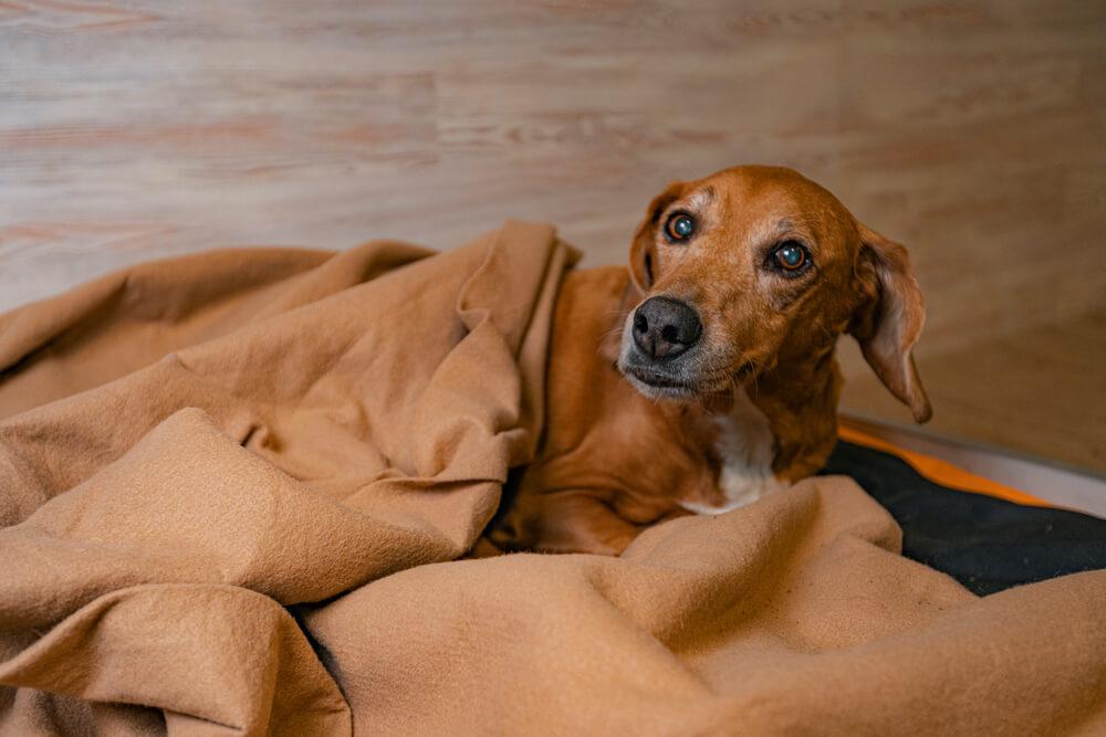 почему собака писает на диван